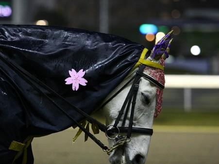 川崎競馬の誘導馬04月開催 桜Verその3-120409-02