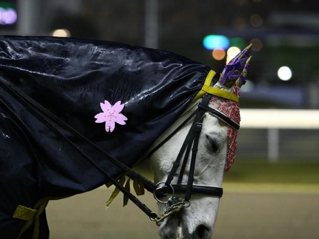 写真: 川崎競馬の誘導馬04月開催 桜Verその3-120409-02-large