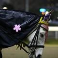 川崎競馬の誘導馬04月開催 桜Verその3-120409-02-large