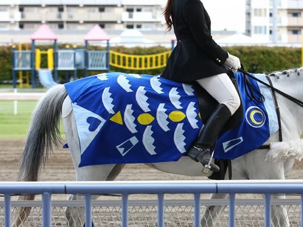 写真: 川崎競馬の誘導馬05月開催 こいのぼり青Ver-120514-18-large