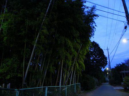 竹林脇の道