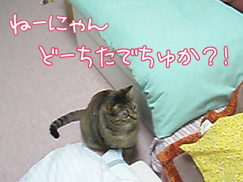 100324-【猫写真】珍獣でちゅ?!
