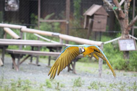 掛川花鳥園 H22.7.7 5