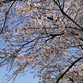 Photos: IMG_2011_04_10_1456