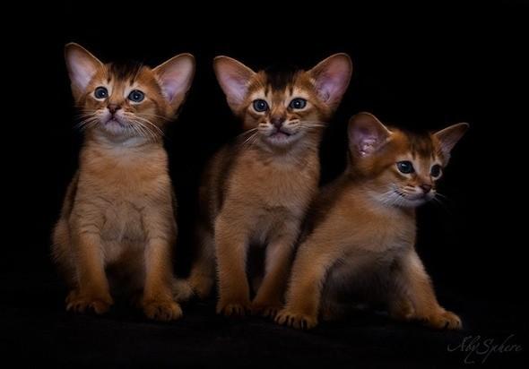 kitten1026_16