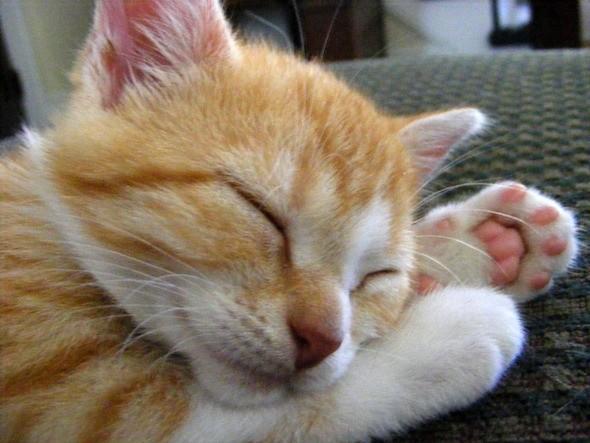 kitten1035_06