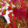 Photos: 秋の色 2