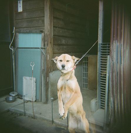 Mery04162011holga_fuji_pro400h