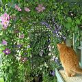 どれ、ここで花見でもしようか。