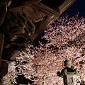 東円寺の夜桜II