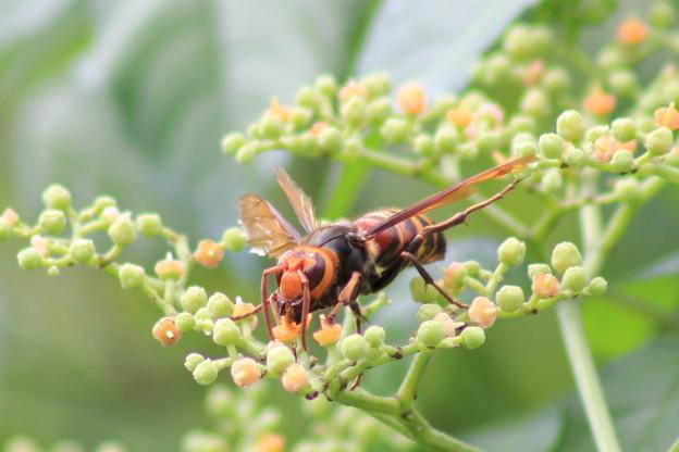働く蜂を観察していて自分を省みたりした。
