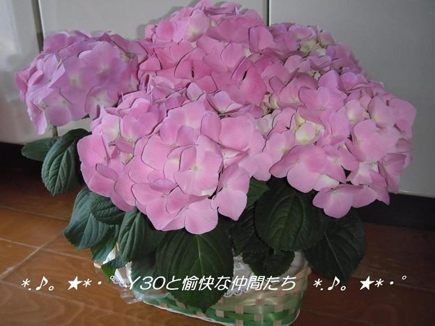写真: DSCF9027_pa