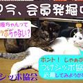 Photos: つけシッポ協会