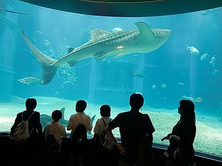 観客を観る甚平鮫