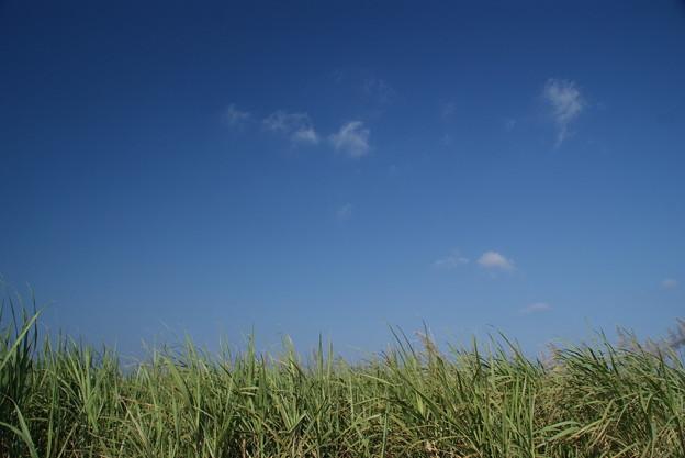 サトウキビ畑 波照間島のクリスマス