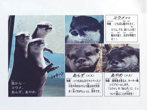 Photos: kamine101204002kai
