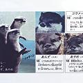 写真: kamine101204002kai