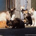 Photos: yamanao999_cats_073