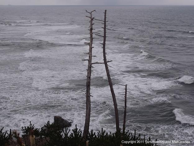 Photos: 木々、朽ちる風景