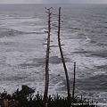 木々、朽ちる風景