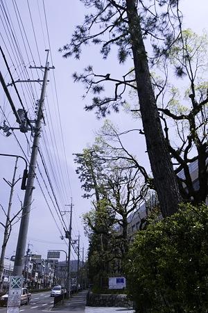 2010-04-18の空