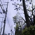 Photos: 2010-04-18の空