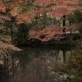 Photos: 2010京都植物園秋11
