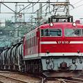 Photos: EF 81 95 貨物列車