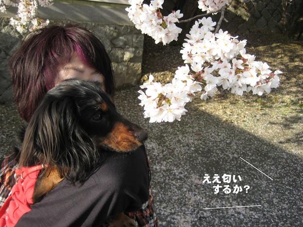 写真: senna0481