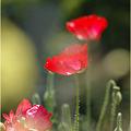 写真: お花ぼっこ・・・。