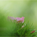 写真: 草色・・・。