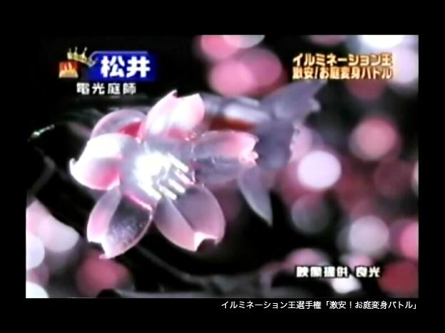 49_桜アップ