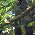 Photos: 木洩れ日の中で♪