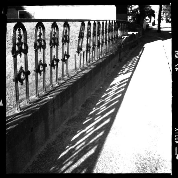写真: Fence and the Shadows 5-6-12