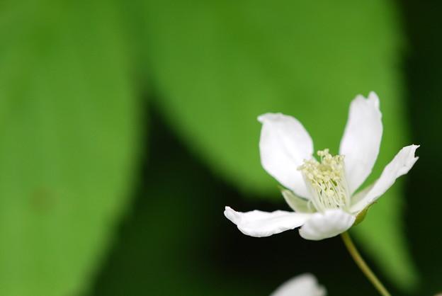 Raspberry Flower 6-7-12