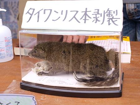 外来種について/Earth Day Tokyo2010