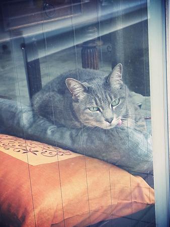 猫はのんびり