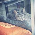 写真: 猫はのんびり