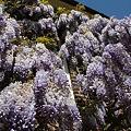 Photos: 2009-04-26-12-53-41_0027