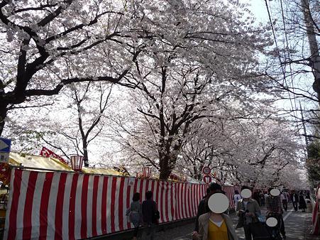 100411-熊谷桜堤 (6)