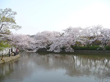110411-鶴岡八幡宮 源平池 (2)