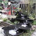国バラ段違い水鉢