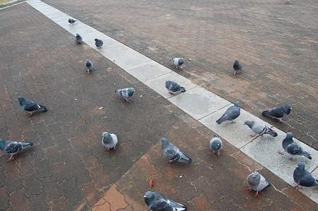鳩に包囲される1
