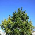 写真: 緑と青