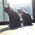 Photos: 猫々の重要任務の1つ、日な...