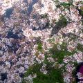 そうだ、桜を見に行こう