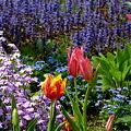 写真: 春っていいね・・・