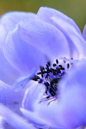 Seeds in Light Blue