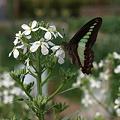 写真: 201105flower 163