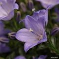 写真: 201105flower 188